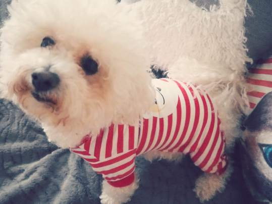 Swish My Swag dogmas christmas for dogs stockings gifts outfits